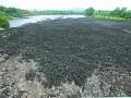 污水厂乱倒污泥 武汉机场高速邻近山林藏臭潭