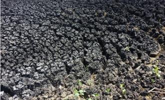 污泥的危害及处置原则