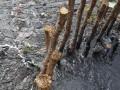 央视曝光鸭尾溪水质污染严重 海口13名干部被问责
